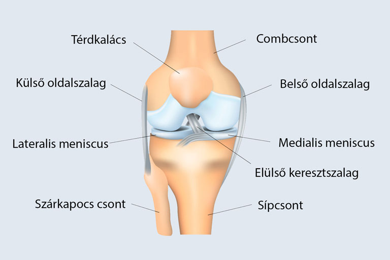 térdízület akut fájdalma térdízületi gyulladás 1 és 2 fok
