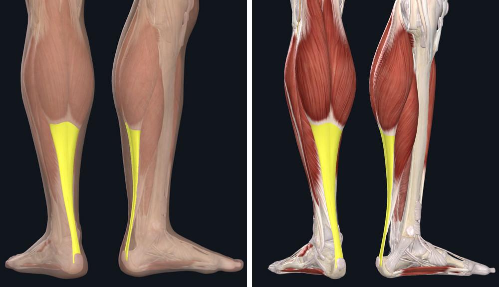 fájdalom a lábak combízületeiben mit kell venni térdgyulladással