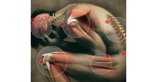 konovalov sc gerinc és ízületek betegségei
