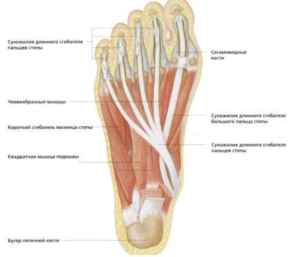 fájdalom a lábak ízületeiben lapos lábak