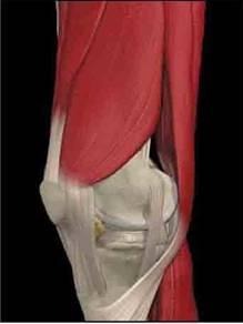 porcjavító kiegészítők ízületi fájdalombalzsamok
