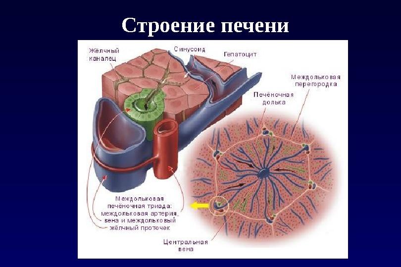 gerinc és ízületek gyulladásos betegségei