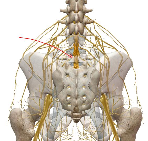 a csípőízület felé sugárzó derékfájás csípő- és ízületi fájdalmak