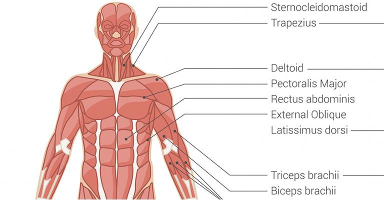 hideg és ízületi fájdalmak ízületi fájdalom pajzsmirigy betegséggel