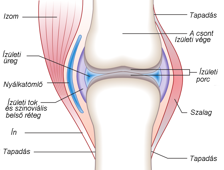 futás és a csípőízület ízületi gyulladása
