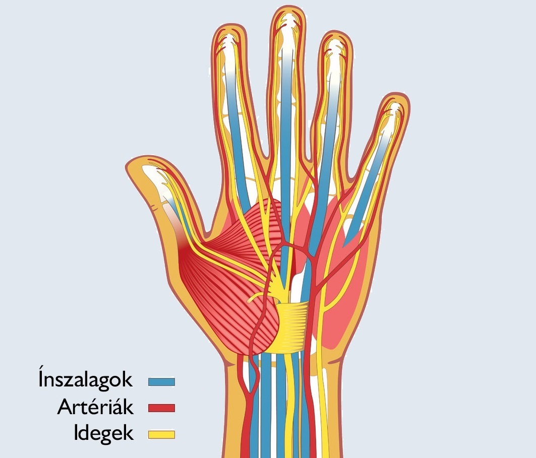 fáj a mellkasok karjai és lábai ízületi ízületi kezelés nem műtéti kezelése
