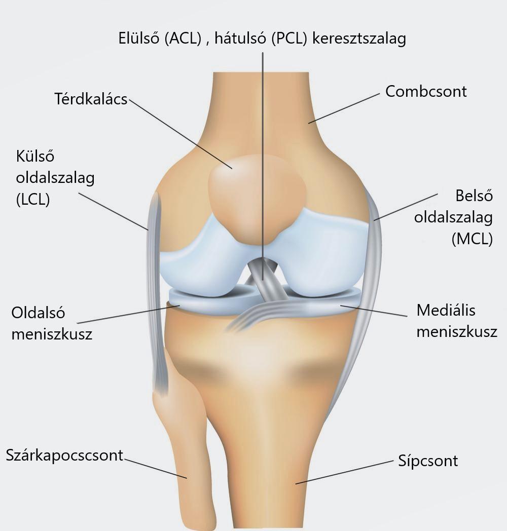 A térd meniszkája - tünetek és károsodás kezelése