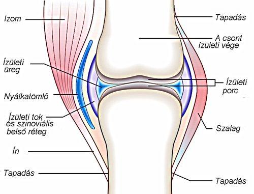 térd artritisz betegség a térdízület 2. fokú ízületi gyulladása