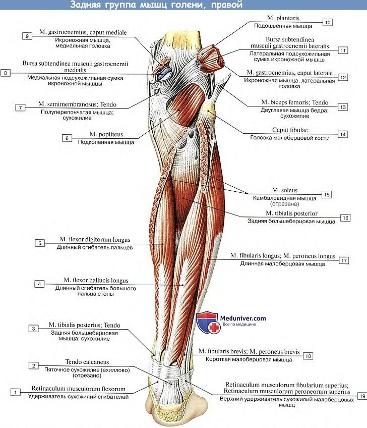 a boka ízületének kezelése brachialis artrosis és ulnar kezelése