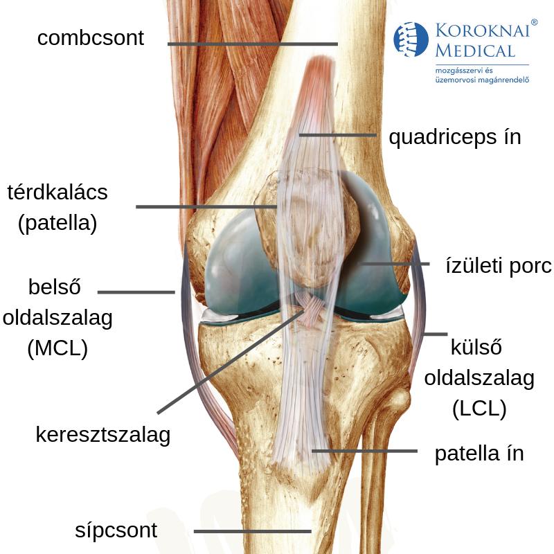 Láb- és ízületi fájdalom járás közben, A térdízület tüneteinek keresztrekesztése