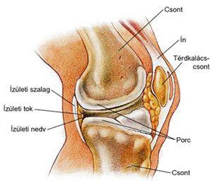 a térd deformáló artrózisának tünetei milyen gyógyszer a térd ízületi gyulladás kezelésére