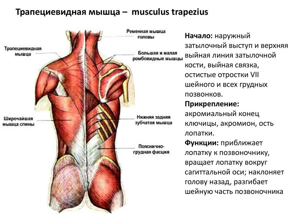 enyhítse a bal vállízület fájdalmát