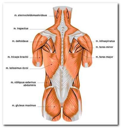 súlyos fájdalom a térd hátán