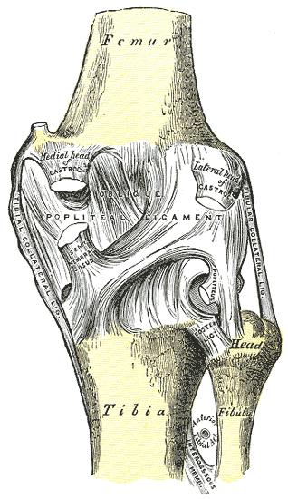 fájdalom a bal lapocka ízülete alatt a lábak és a kéz ízületi gyulladásának tünetei