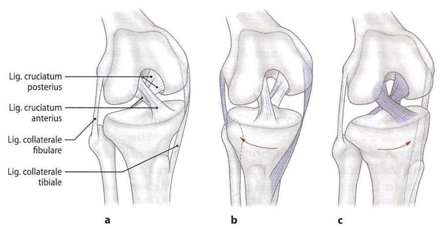 csizma duzzanat szindróma váll és ízületi fájdalom a vállon