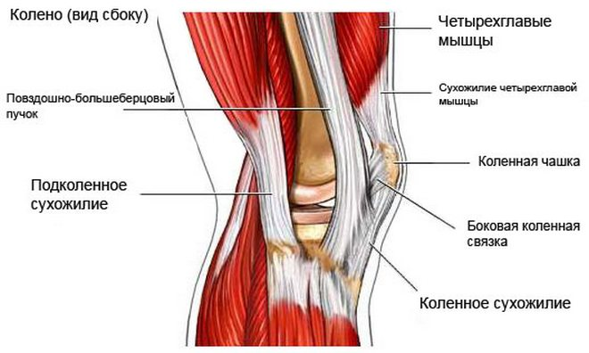 Nyújtás és fájdalom a csípőízületben, Hírlevél feliratkozás