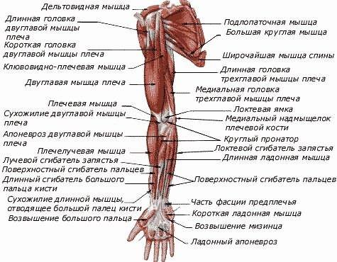 a vállízület artrózisa 1. szakasz
