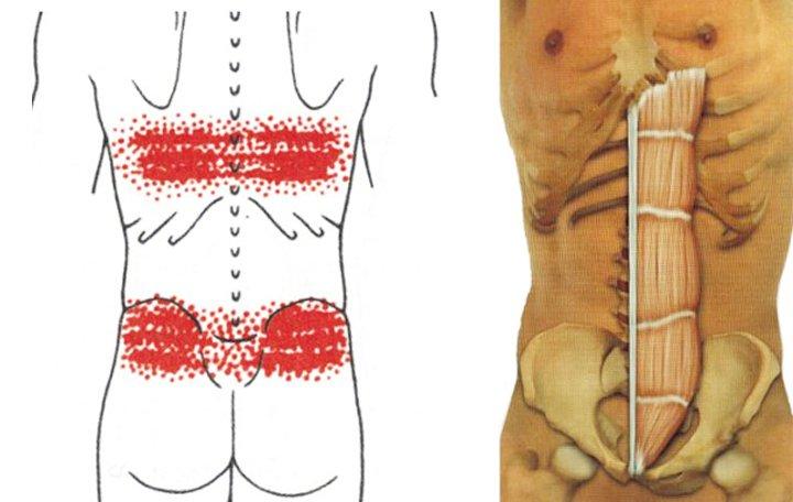 a bal térdízület belső meniszkuszának krónikus károsodása