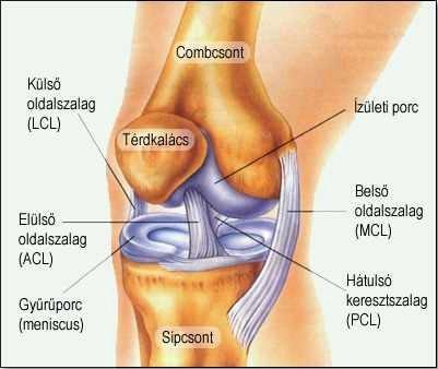 az összes fő ízület betegségei fájdalom és ropogás a csontokban és ízületekben