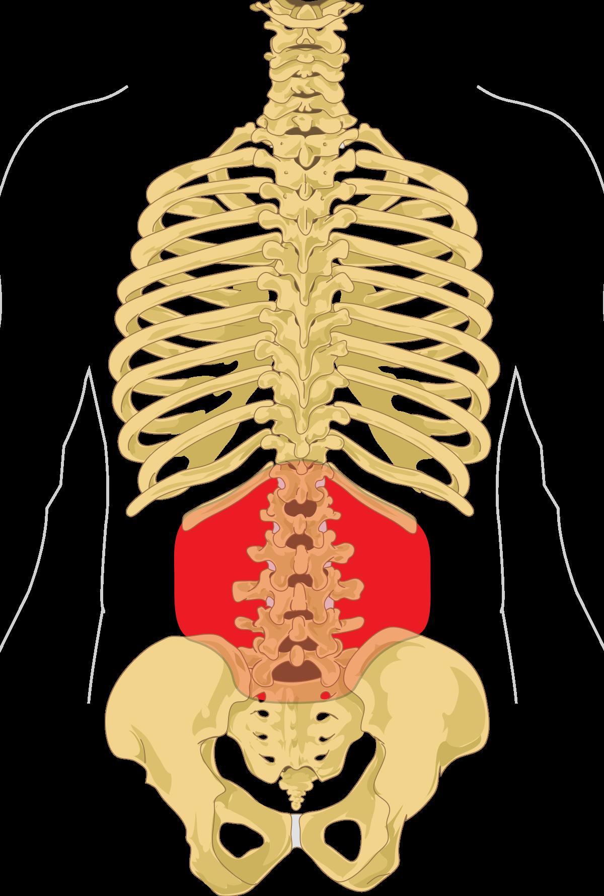 az ízület fáj az alsó lábszárról kenőcs krónikus ízületi fájdalmak esetén
