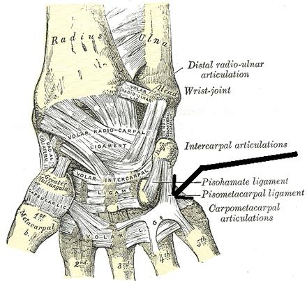 csukló ligamentum könnykezelés