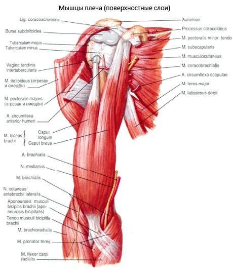 vállízület subacromialis artrózisa lábfájdalom az ízületekben