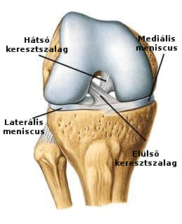 gerinc és ízületek kezelése zsukovskyban a térd artrózisának kezelése kompresszorokkal