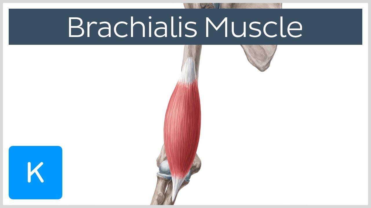 Brachialis arthrosis jelei, Arthrózis (porckopás) tünetei és kezelése