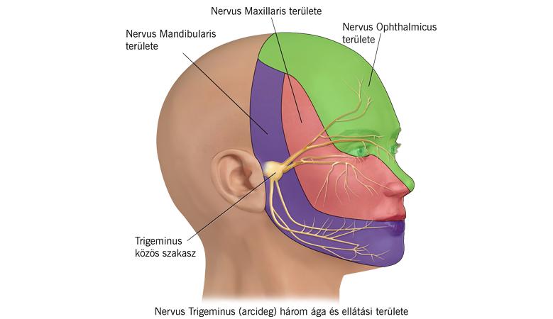 fejfájás fáj a kéz ízületei nimica ízületi gyulladással
