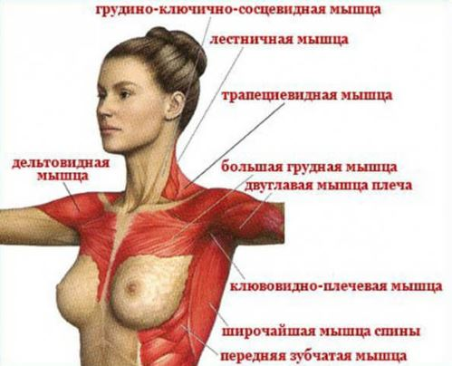 nyaki osteochondrozis kenőcskezelési áttekintések