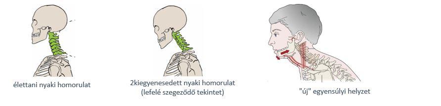 a boka ízületének kezelése az ózon artrózis kezelési áttekintése
