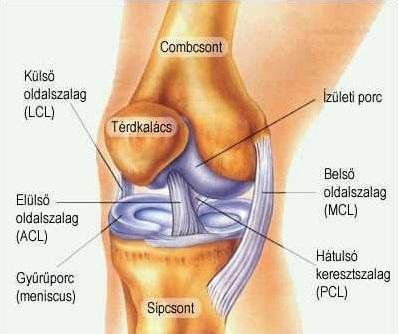 térdízület akut fájdalma csípőízületi fájdalomrák esetén