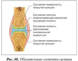 33 éves korában az összes ízület fáj)